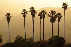 Palma sulla collina Immagini Stock Libere da Diritti