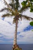 Palma sulla priorità bassa del cielo Immagini Stock Libere da Diritti