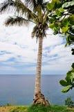 Palma sulla priorità bassa del cielo Fotografia Stock