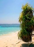 Palma sulla spiaggia Immagini Stock