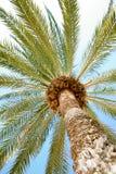 Palma sulla spiaggia Fotografie Stock