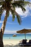 Palma sulla spiaggia Immagine Stock Libera da Diritti