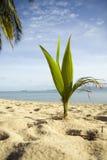Palma sulla spiaggia Immagine Stock