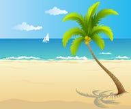 Palma sulla spiaggia Immagini Stock Libere da Diritti
