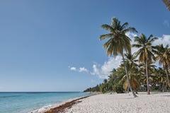 Palma sulla spiaggia caraibica fotografia stock libera da diritti