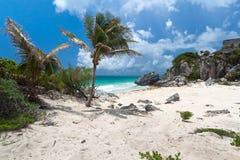 Palma sulla spiaggia idillica Fotografia Stock Libera da Diritti