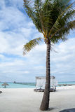 Palma sulla spiaggia, Maldive, Ari Atoll immagini stock