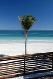 Palma sulla spiaggia tropicale fotografia stock