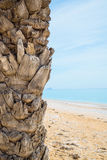 Palma sulla spiaggia tropicale Immagini Stock