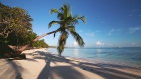 Palma sulla spiaggia tropicale dell'isola e sul bello mar dei Caraibi Repubblica dominicana archivi video