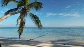 Palma sulla spiaggia tropicale dell'isola e sul bello mar dei Caraibi Repubblica dominicana video d archivio