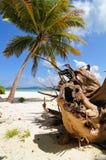 Palma sulla spiaggia tropicale selvaggia Immagine Stock