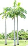 Palma tailandesa Foto de Stock Royalty Free