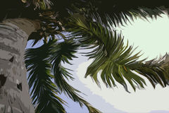 Palma torcida Imagens de Stock