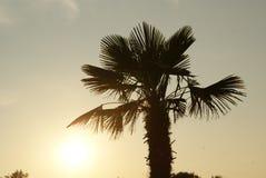 Palma, tramonto ed acqua Fotografie Stock Libere da Diritti