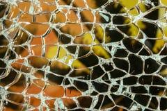 Palma a través del vidrio quebrado Fotografía de archivo