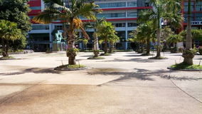 Palma tre Immagini Stock
