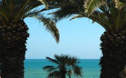 Palma Trees1 Immagini Stock Libere da Diritti