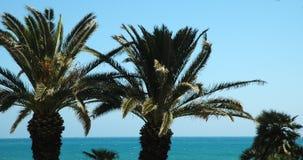 Palma Trees2 Immagini Stock