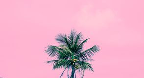 Palma tropical fotos de stock royalty free