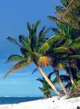 Palma tropical Imagenes de archivo