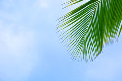 Palma tropical imagen de archivo libre de regalías