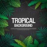 Palma tropical Imágenes de archivo libres de regalías