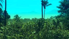 Palma tropical del océano de la isla metrajes