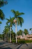 Palma tropical meridional de la areca del centro turístico de la selva tropical de Hainan Xinglong, Imagen de archivo