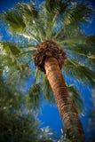 Palma tropicale Fotografie Stock