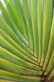 Palma tropicale Fotografia Stock