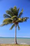 Palma tropicale alla spiaggia Fotografia Stock