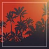 Palma tropicale con alba ed il cielo blu della luna del sangue fotografie stock