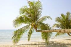 Palma tropicale con le foglie verdi sopra l'acqua di mare sulla spiaggia di sabbia thailand Immagini Stock Libere da Diritti