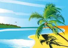 Palma tropicale del mare della spiaggia Fotografia Stock