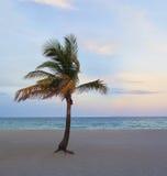 Palma tropicale della spiaggia Fotografia Stock