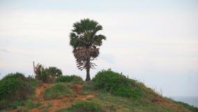Palma tropicale sulla collina dell'isola Litorale di mare video d archivio