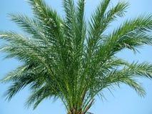 palma tropikalna Obrazy Stock