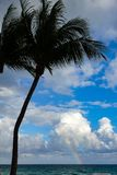 Palma in una spiaggia con cielo blu e un arcobaleno immagini stock libere da diritti