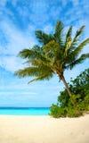 Palma in una spiaggia tropicale Fotografie Stock Libere da Diritti