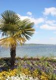 Palma van Mainau Royalty-vrije Stock Fotografie