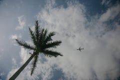 Palma verde e plano pequeno no céu azul com nuvens imagens de stock royalty free