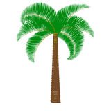 Palma verde en un fondo blanco Foto de archivo