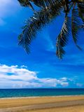 Palma verde, spiaggia gialla, mare, cielo blu Fotografie Stock