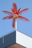 Palma vermelha Foto de Stock Royalty Free