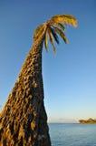Palma vicino all'oceano nel cielo Fotografia Stock Libera da Diritti