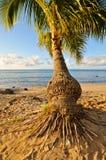 Palma vicino all'oceano nel cielo Fotografie Stock Libere da Diritti