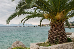 Palma vicino alla spiaggia, Leucade fotografie stock