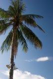 Palma vietnamita con il megafono Fotografia Stock