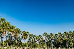 Palma w parku Obrazy Stock